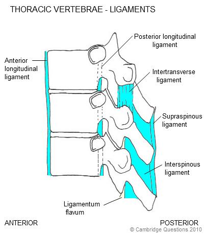 what is vertebral subluxation